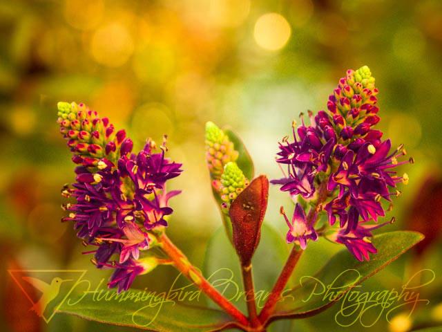 FlowerChildren-NoKaleidoscope