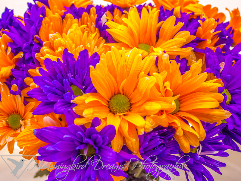 Purple and Orange Daisies