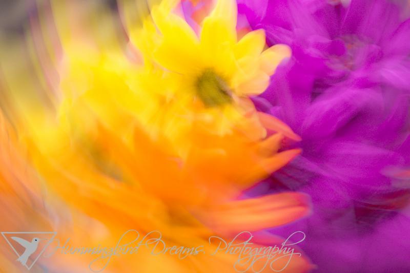 Flower Dancer - Darker