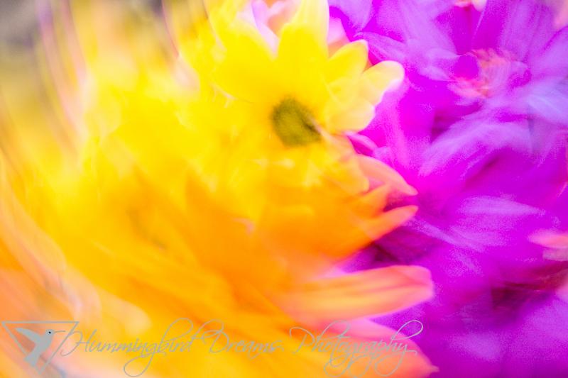 Flower Dancer Light(er)