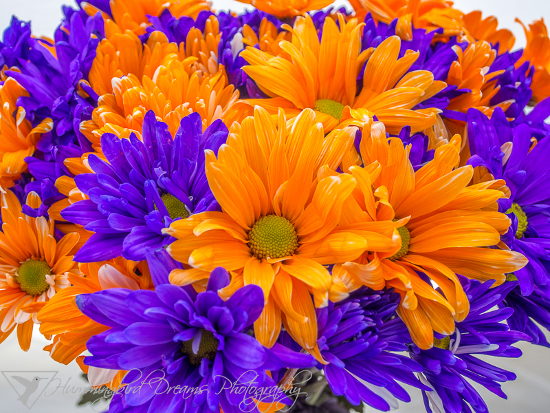 Orange and Purple Daisies