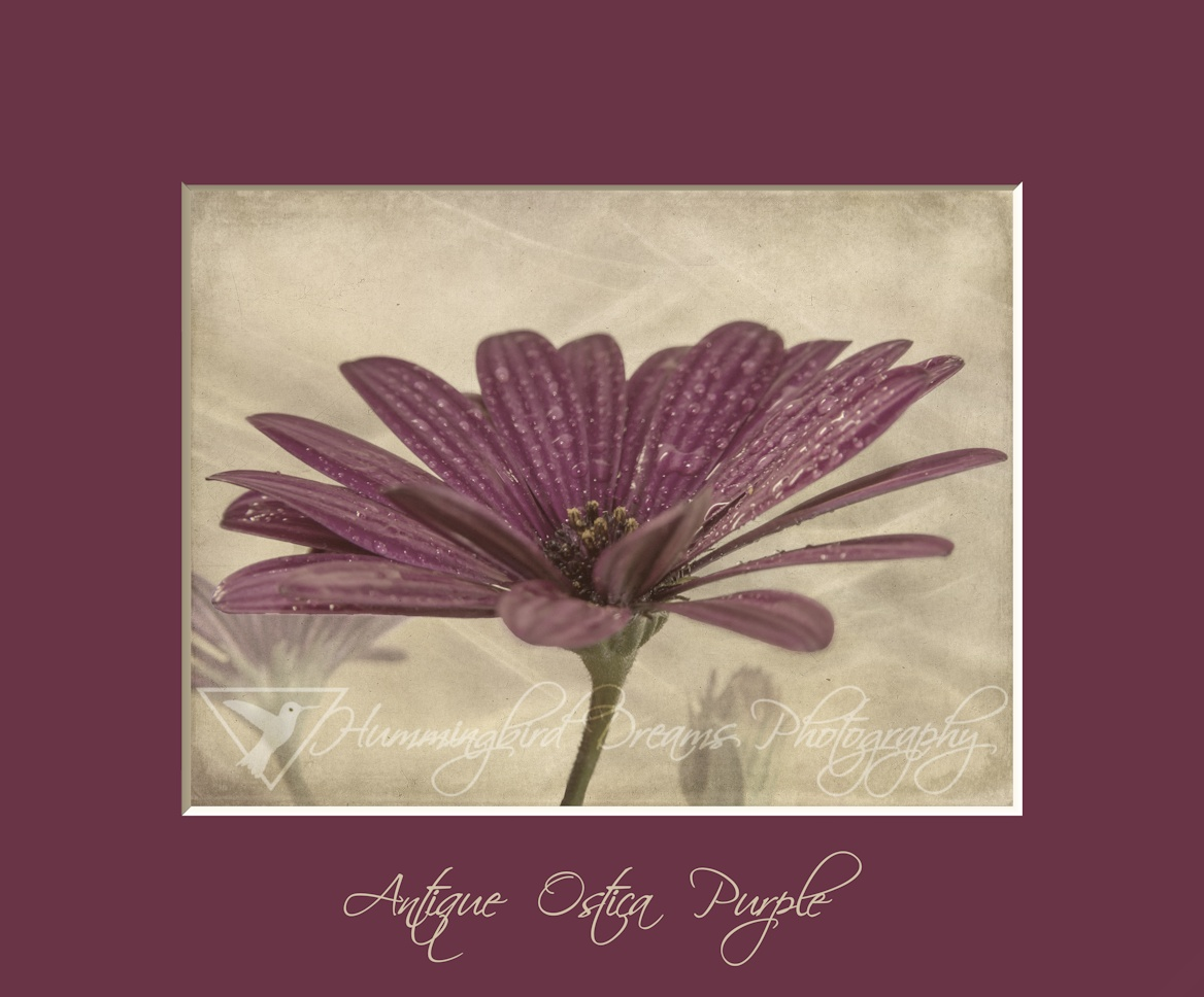 Antique Ostica Purple