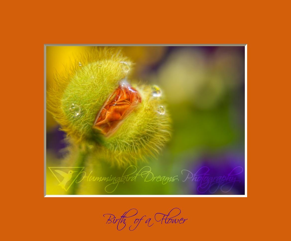 Birth of a Flower