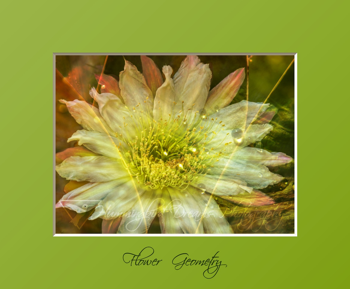 Flower Geometry