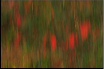 Poison Oak Abstract