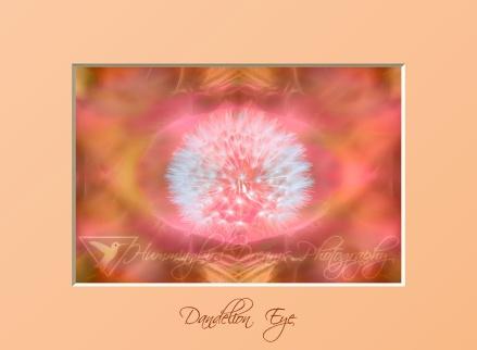 Dandelion Eye