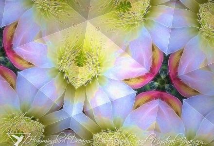 Cactus Flower Kaleidoscope