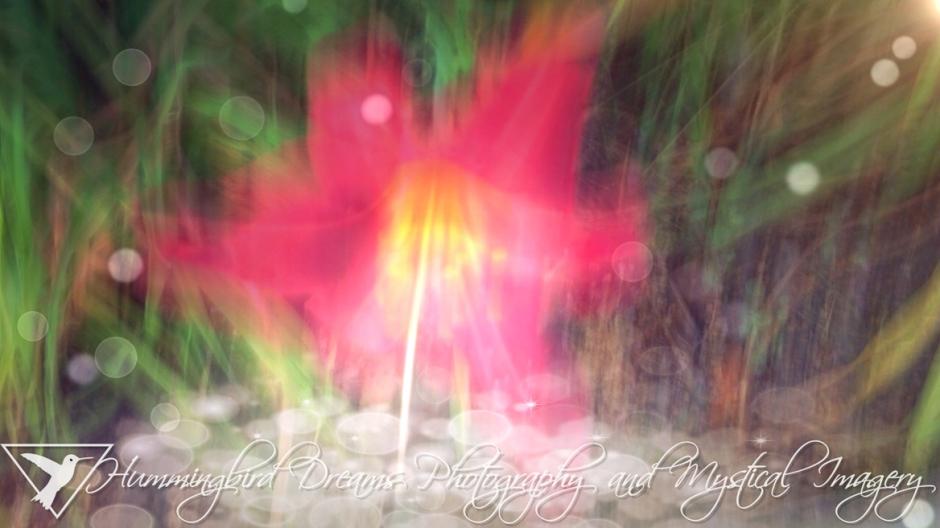 Daylily Magic