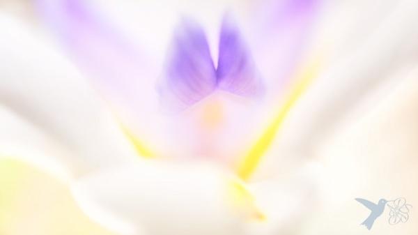 Light Wings II
